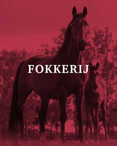 homepage-blokje-fokkerij-merrie-met-veulen-400x500-tekst-web